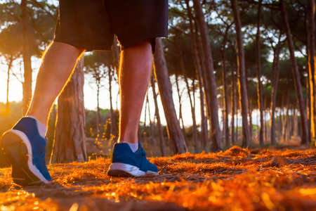 Man with sport shoes and shorts walking in a pinewood at sunset Foto de archivo