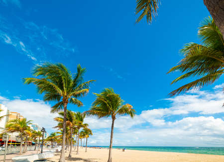 Coconut palm trees and white sand in Las Olas Beach. Fort Lauderdale, USA