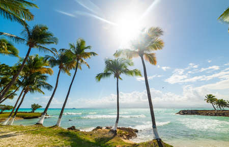 Coconut palm trees and turquoise sea under a shining sun in Bas du Fort beach in Guadeloupe, French west indies. Guadeloupe is an archipelago that is part of the Lesser Antilles in the Caribbean sea
