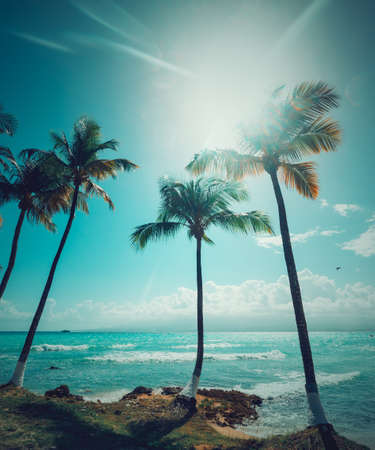 Palm trees and turquoise sea under a shining sun in Bas du Fort beach in Guadeloupe, French west indies. Guadeloupe is an archipelago that is part of the Lesser Antilles in the Caribbean sea Banco de Imagens