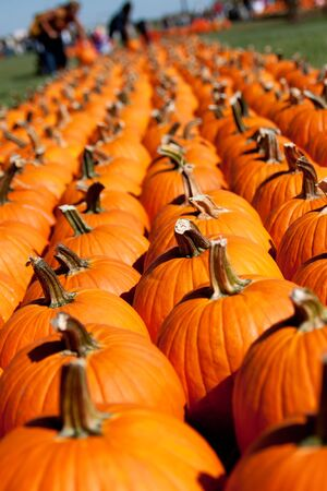 Pumpkins at a farm Stock Photo