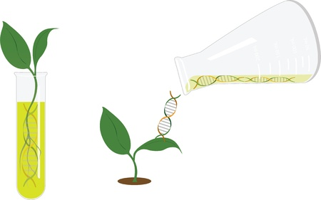 Genetic research - sprout Stock Vector - 16976139
