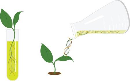 Genetisch onderzoek - spruit Stockfoto - 16976139
