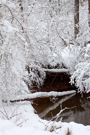 snow tree: Newly fallen snow is piled on twigs and branches near a flowing stream