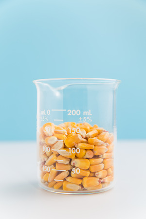 Corn in beaker on blue used in research of food products, GMOs, and biofuels