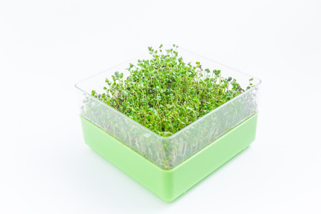 Bright green crop of microgreen sprouts on a white background