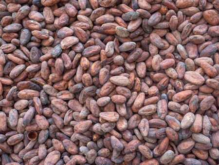 Flat lay of organic cacao beans at a family farm in Costa Rica