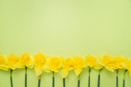Border of daffodils and stems on a bright spring green background