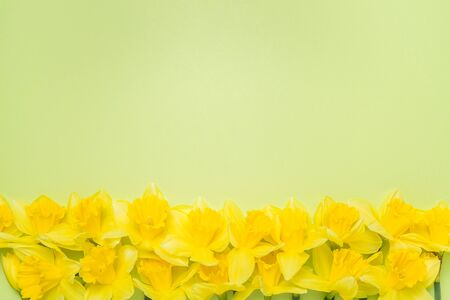 Double border of daffodils and stems on a bright spring green background Banque d'images - 128341090