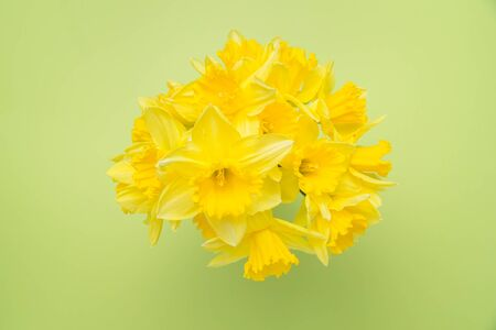 Overhead view of a daffodil bouquet on a bright green background
