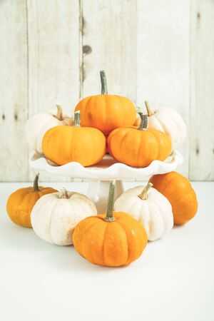 Orage and white mini pumpkins on wood plank background