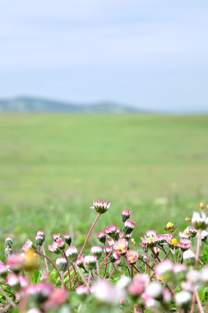 meadow with daisies blue sky, green field Stock Photo - 7528866