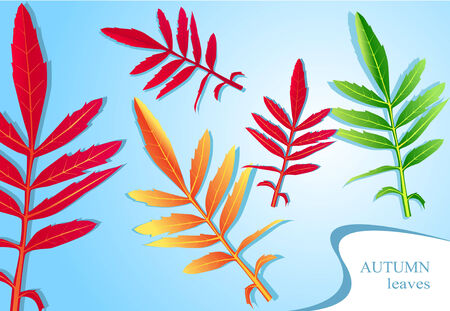 autumn leaves vector Stock Vector - 8000414