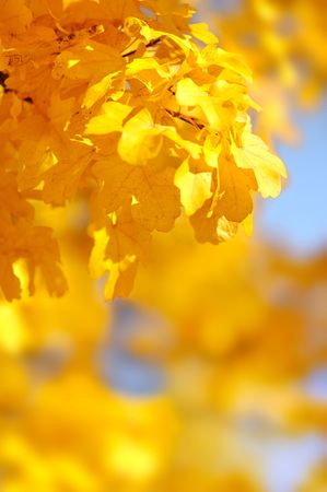 the yellow autumn leaves Stock Photo - 8193273