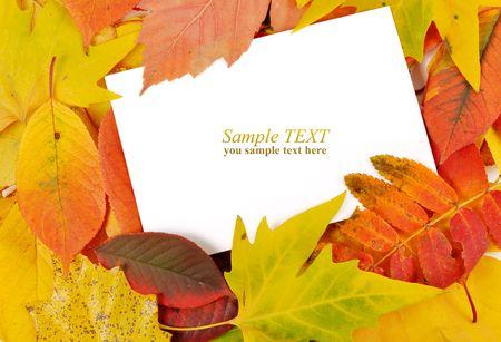 congratulation form in the autumn foliage photo