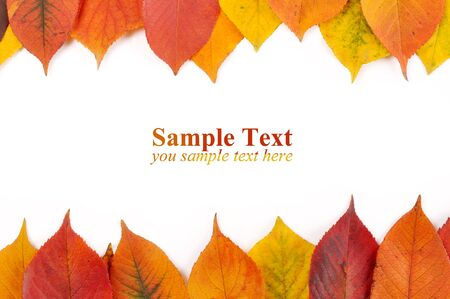 white background for the congratulations in the autumn leaves Stock Photo - 8193287