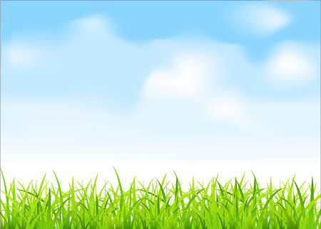 blue sky and fields: green grass and blue sky