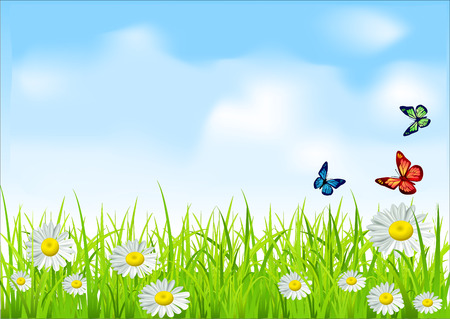 green grass and daisies on a background of blue sky with butterflies Illustration