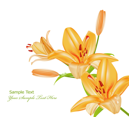 white lily: vector twigs orange lilies on a white background