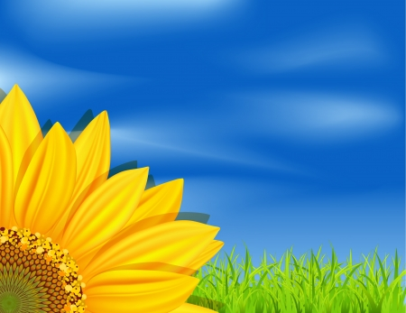 vector background with sunflowers on a blue sky and green grass Stock Vector - 9279427