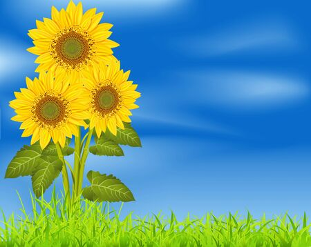 vector background with three sunflowers on a blue sky and green grass Stock Vector - 9279430