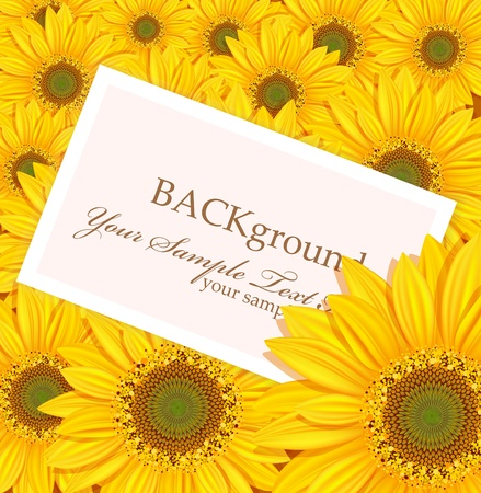 vector greeting card against the backdrop of sunflowers Vector