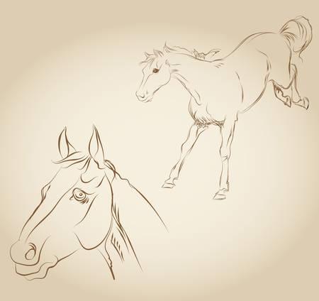 vector draw a horse Vector