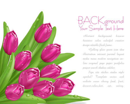 pink tulips with drops of dew Stock Vector - 9616585