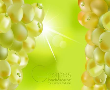 dewdrops: fresh grapes with drops of dew on a green background, with sunshine