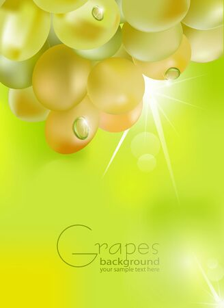 fresh grapes with drops of dew on a green background, with sunshine Vector