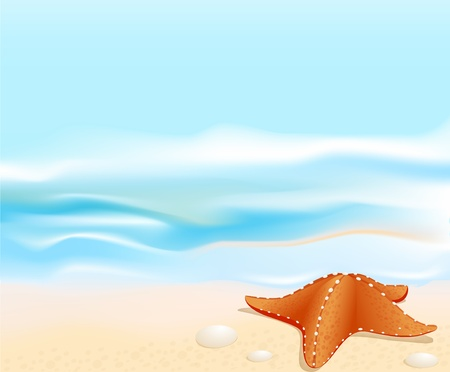 shell fish: Marine landscape with a sea star (starfish), beach, sea and rocks