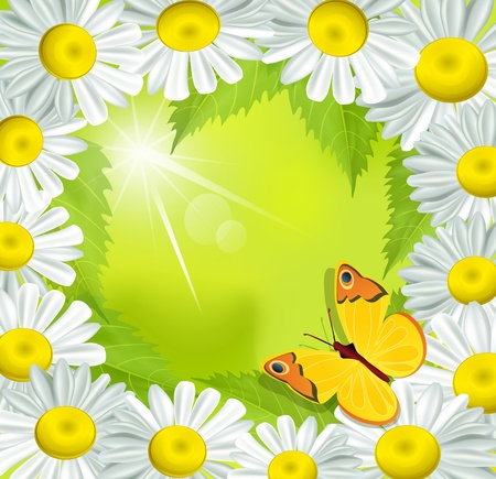 yellow daisy: frame of daisies with a butterfly on a green background Illustration