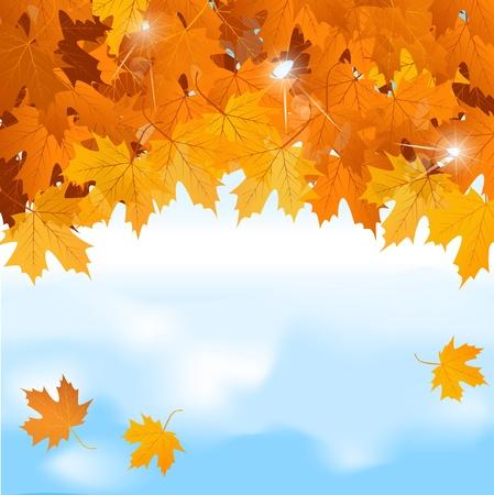 autumn leaf frame: Vector rojo Arce hojas sobre fondo de cielo azul