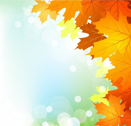 focus group: autumn leaves on a bright sunny background