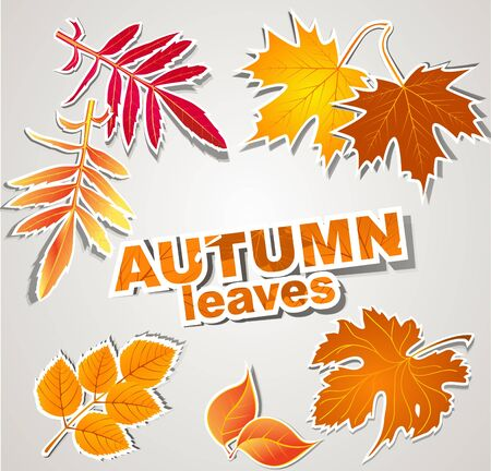 vector set: autumn leaves Vector