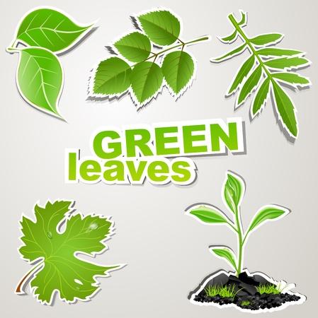 vector instellen sticker: groene bladeren