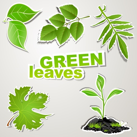 vector set sticker: green leaves Vector