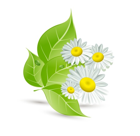 Background with daisies and green leaves Stock Vector - 10996098