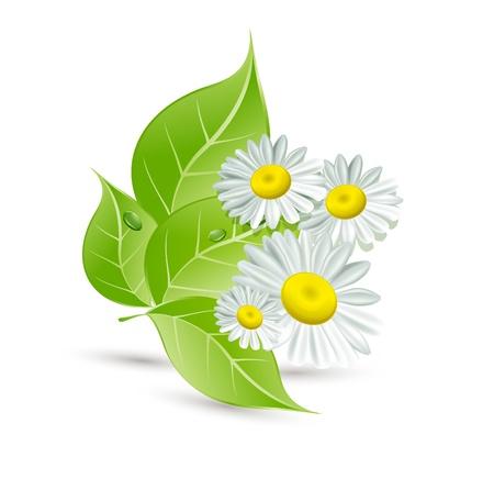Fondo con margaritas y hojas verdes Ilustración de vector
