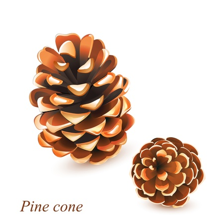 pine cones isolated on white Vector