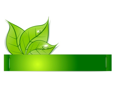 green banner: paper strip with green leaves and drops of dew on a white background Illustration