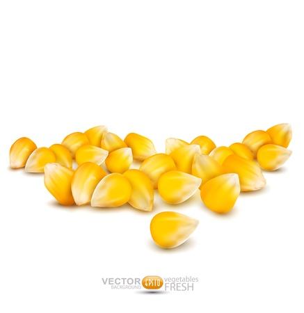 grains épars de maïs sur un fond blanc