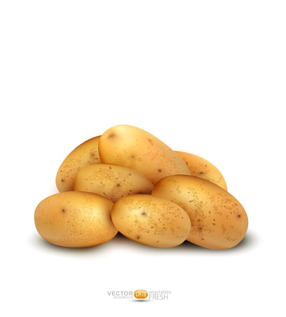 batata: tub�rculos de patata aislado en un fondo blanco Vectores