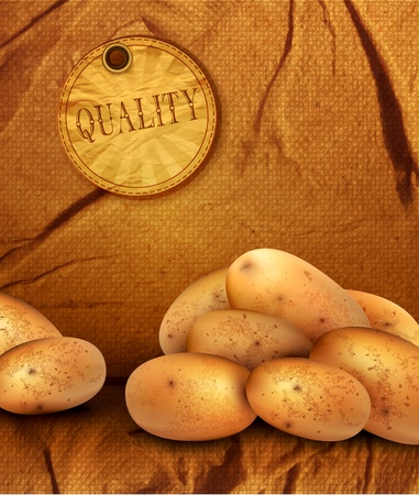 vintage background with sackcloth and potato tubers Stock Vector - 12866892