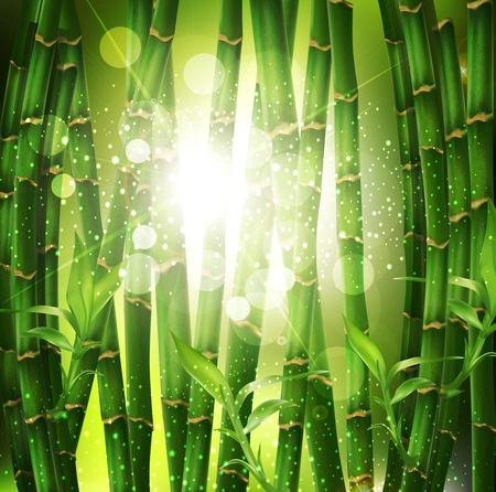 avuç: background with oriental bamboo grove, and sunlight
