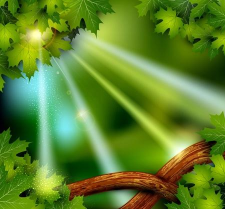 fondo luminoso: vector de fondo de la selva misteriosa m�stica con los �rboles y las hojas Vectores
