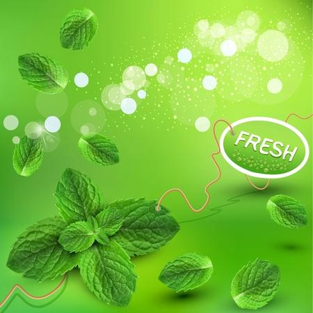 menta: vector de fondo verde con hojas de menta fresca