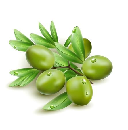 foglie ulivo: Vector olive verdi isolato su uno sfondo bianco