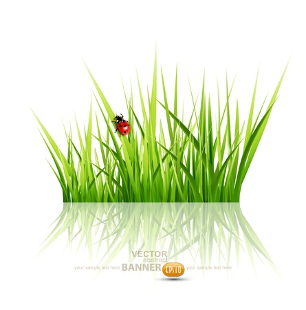 Vector grass with ladybird isolated on white background Stock Vector - 17336758