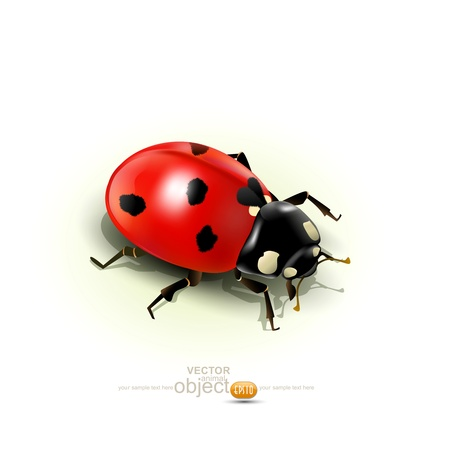 Vector ladybug, isolated on white background Stock Vector - 17336746